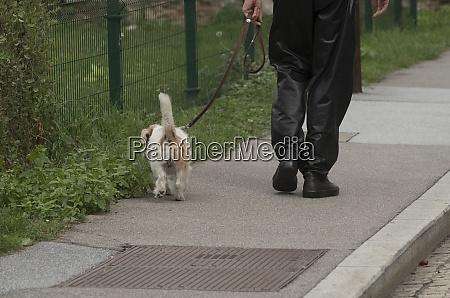 haustierbesitzer nimmt hund fuer einen spaziergang