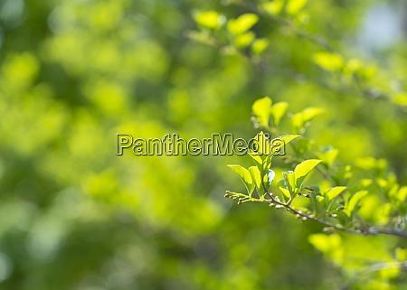 frisches gruen als hintergrund gruene blaetter