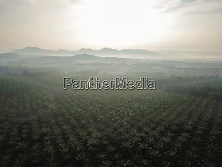 luftbild OEl palm farm