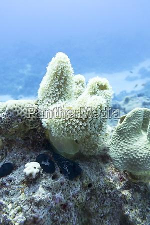 bunte korallenriff am grund des tropischen