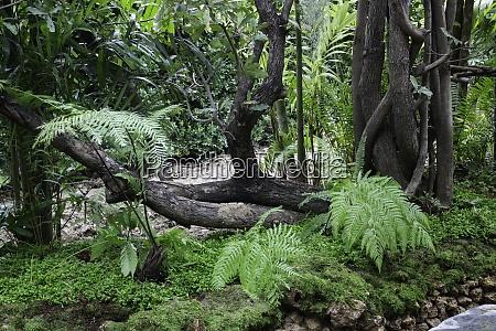 grüne, pflanzen, im, tropischen, garten - 29012259