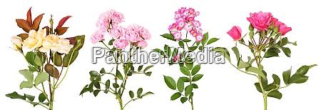 auswahl verschiedener rosenblumen