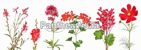 auswahl an roten gartenblumen