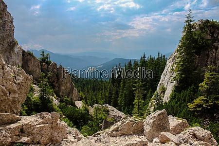 landschaft der berge mit wald und