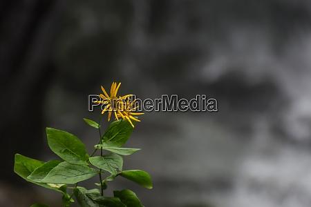 kleine zarte gruene gelbe blume mit