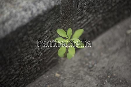 pflanzen als zeichen der vitalitaet