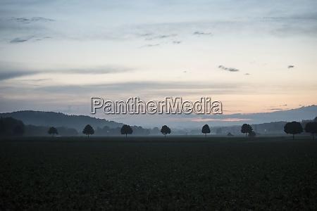 chaussee, oder, allee, auf, dem, land - 29059792