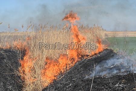 brennendes trockenes gras und schilf