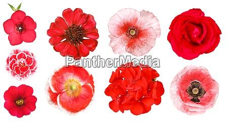 gruppe von verschiedenen roten gartenblumen isoliert