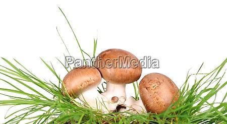 braune pilze im gras champignons