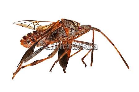 insekt extreme nahaufnahme