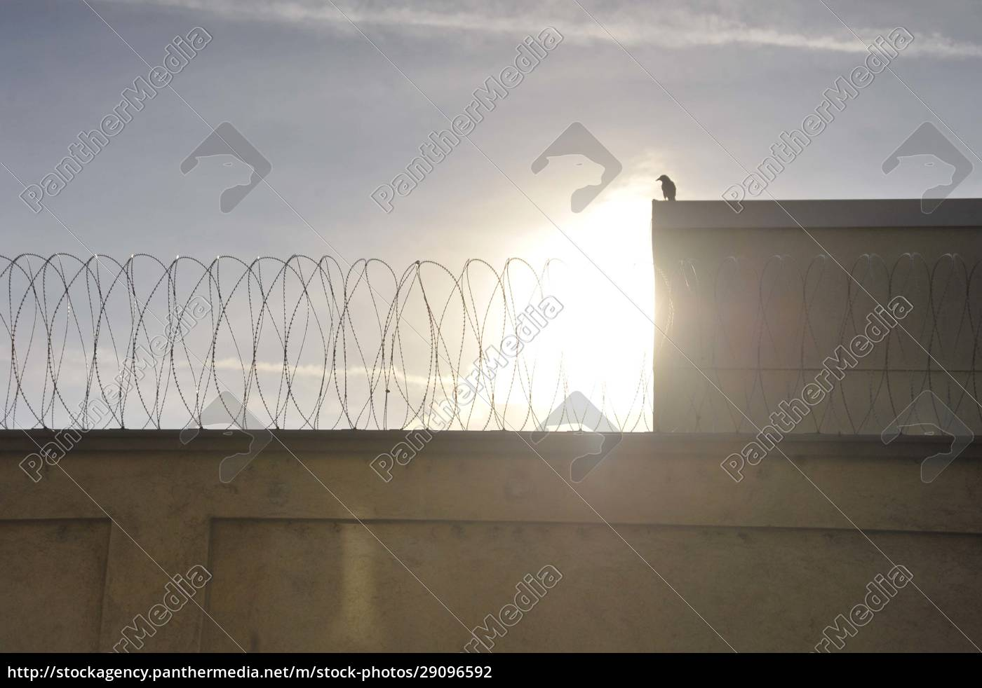 barbed, wire, in, the, penal, system - 29096592