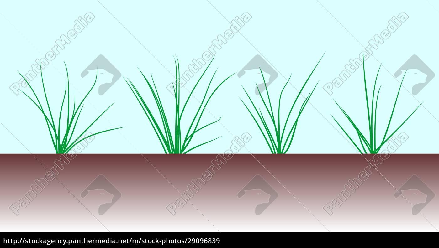 grass, plants, illustration - 29096839