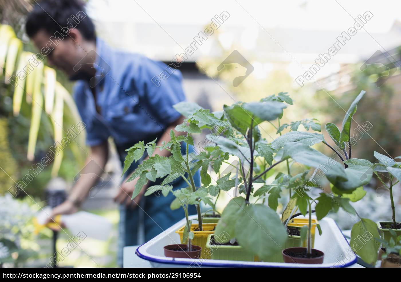 woman, watering, potted, plants, on, patio - 29106954