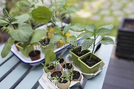 tiny, potted, plants, on, patio, table - 29108715