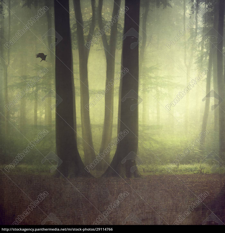 laubwald, im, sommer, digital, manipuliert - 29114766
