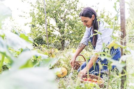 frau erntet frisches biologisch angebautes gemuese
