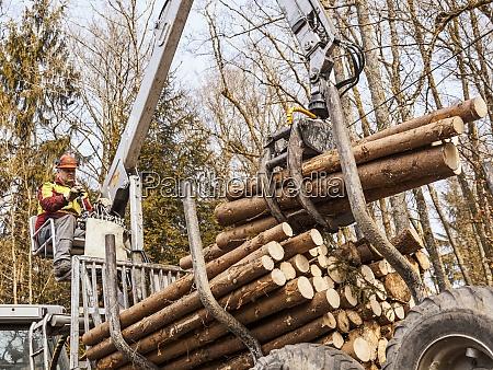 deutschland muehlenbach entfernung von abgeholzten baumstaemmen