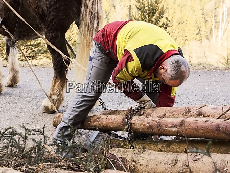 germany, , muehlenbach, , logger, fastening, , tree - 29117574
