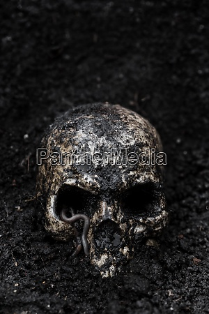 skull, in, wet, soil, with, earthworm - 29118148