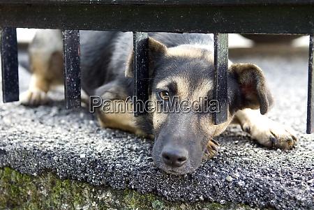 strassenhund bettelnd
