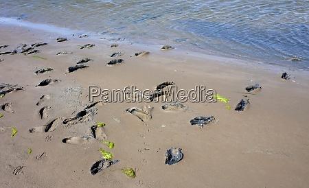 mudflat wanderung fussabdruecke an der nordsee