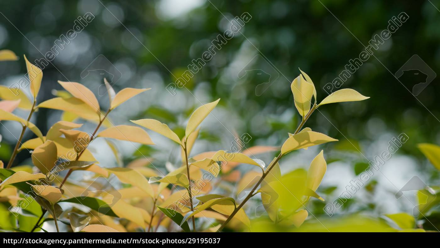 autumn, fall, tree, leave, in, the - 29195037