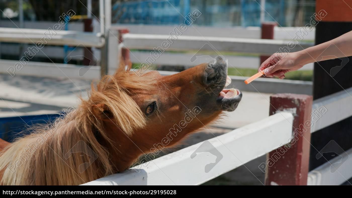 feed, horse, in, the, farm - 29195028