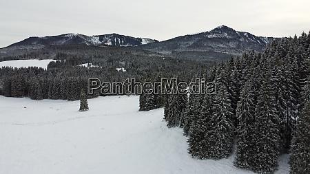 luftaufnahme mit drohne von schneebedecktem wald