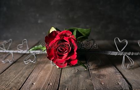 liebessymbol rote rosen
