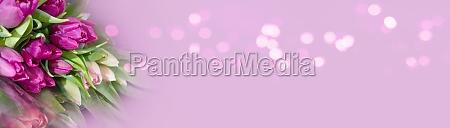 tulpen, auf, rosa, bokeh, hintergrund - 29263104