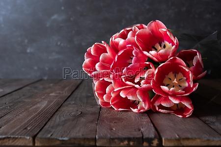 buendel frischer roter tulpen