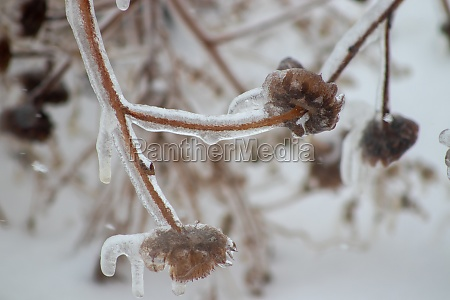 ice, covered, plants, close, up, in - 29282848