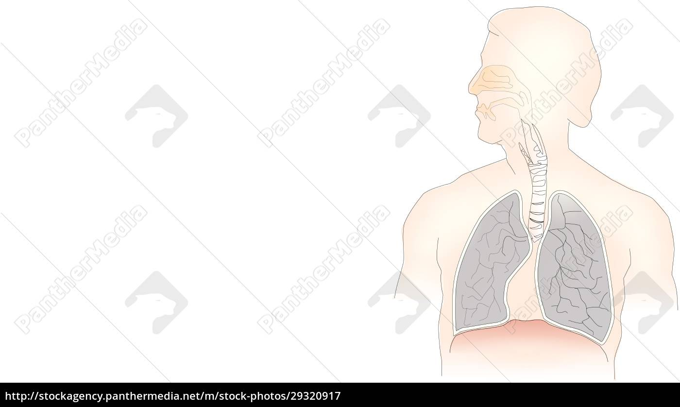 info-graphic, illustration, of, lungs, on, white - 29320917