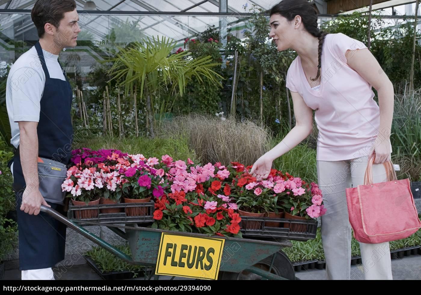 kunden, kaufen, topfpflanzen - 29394090