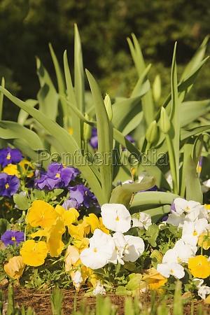 nahaufnahme bluehender pflanzen