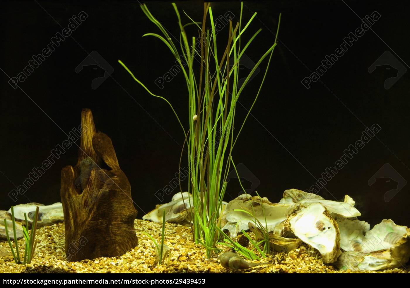 nahaufnahme, von, pflanzen, unter, wasser - 29439453