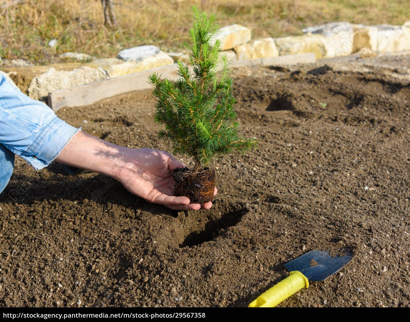 hand, plants, in, the, hole, plants - 29567358