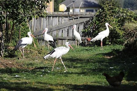 stork, station, for, injured, animals - 29576646