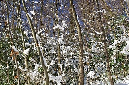 winter in bielefeld ostwestfalen lippe nordrhein
