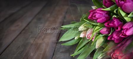 lila tulpen auf holz vintage bretter