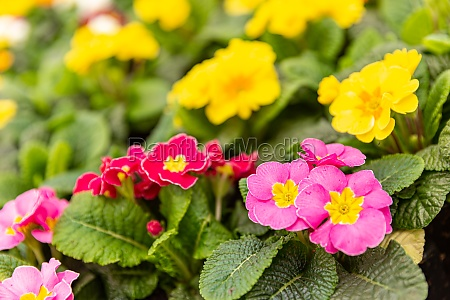 young, fresh, succulent, bright, plants - 29621551