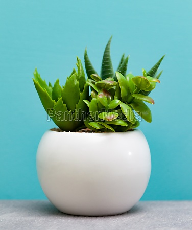 green, succulent, plants, in, white, flower - 29641918
