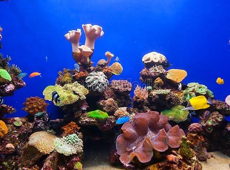 korallenaquarium