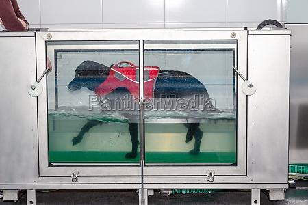 hund geht in einem unterwasser laufband