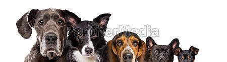 fuenf verschiedene hunde