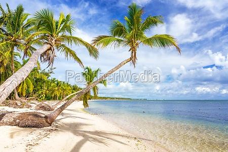 sonniger tropischer strand in dominikanische republik