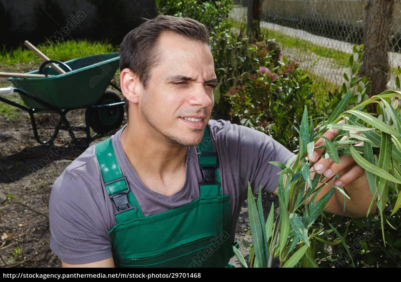 männlicher, gärtner, der, pflanzend, betrachtet - 29701468