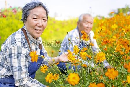glueckliches asiatisches seniorenpaar arbeitet morgens im