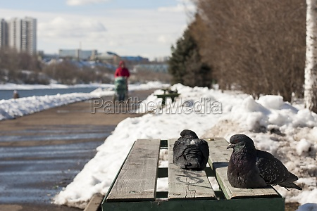 zwei tauben sitzen auf einer parkbank